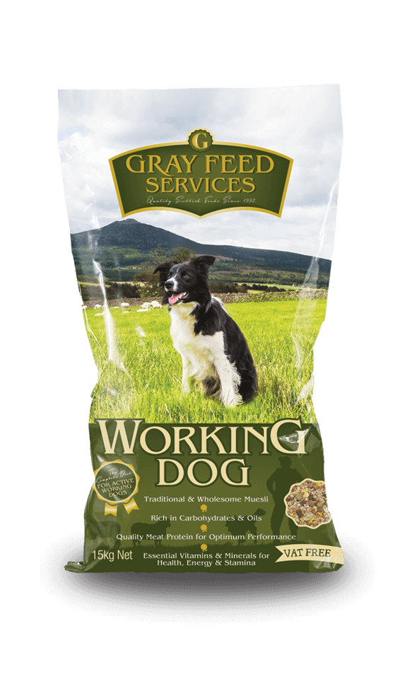 Should You Add Water To Dry Dog Food